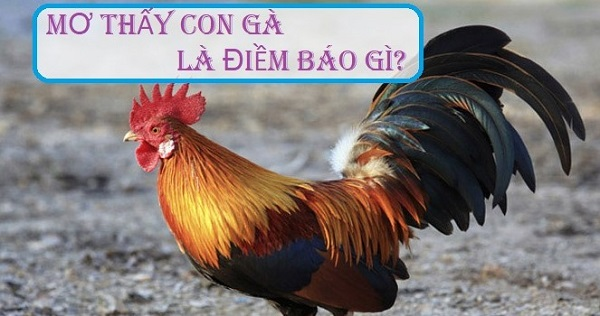 giac-mo-ve-ga-diem-bao-con-so-xocdiaonline.club-1